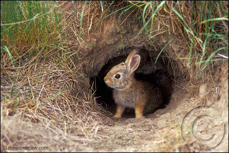 View topic - Rabbits Home,Rabbit's - 157.7KB